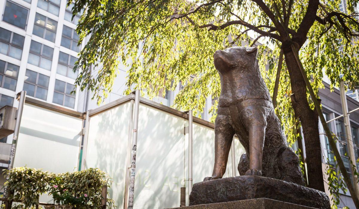 渋谷教育学園渋谷2019年解きました